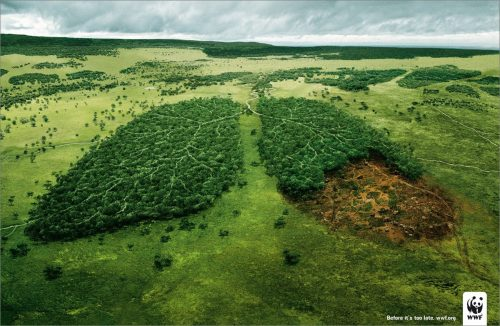 WWF Lungs