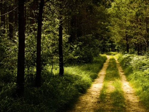 Germany Forest Road Wallpaper