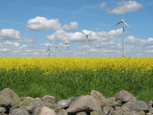 Windmills in Yellow Field