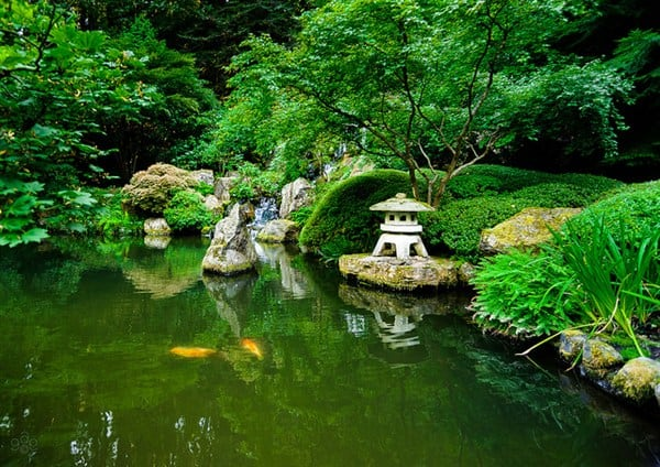 Relaxing your mind 30 awe inspiring photos of japanese for Portland japanese garden koi