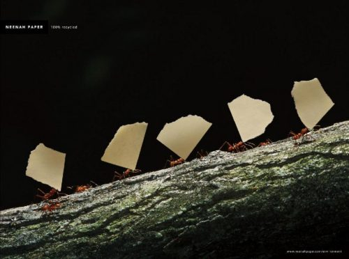 Papers Worldwide | Leaf Cutter Ants