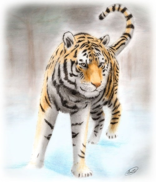 Traditional Tiger 2