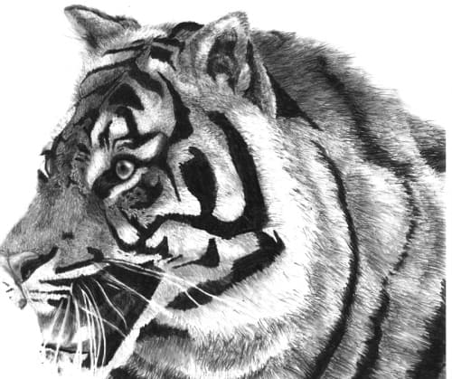 Traditional Tiger 5