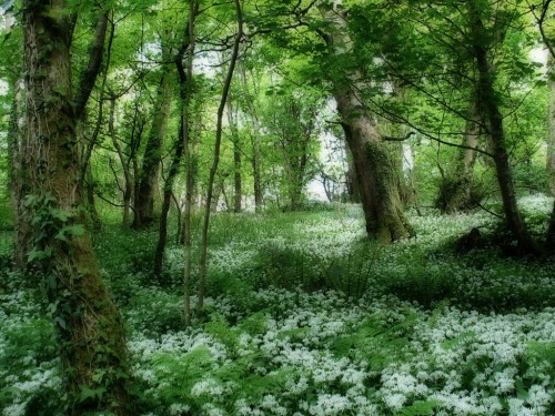 Ireland Glade