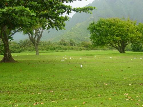 Meadow in Hawaii