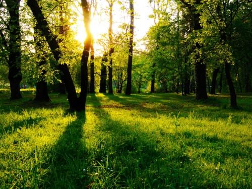 Sun Between Trees Wallpaper