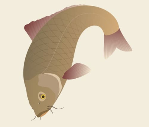 Create a Traditional Japanese Koi Carp Illustration
